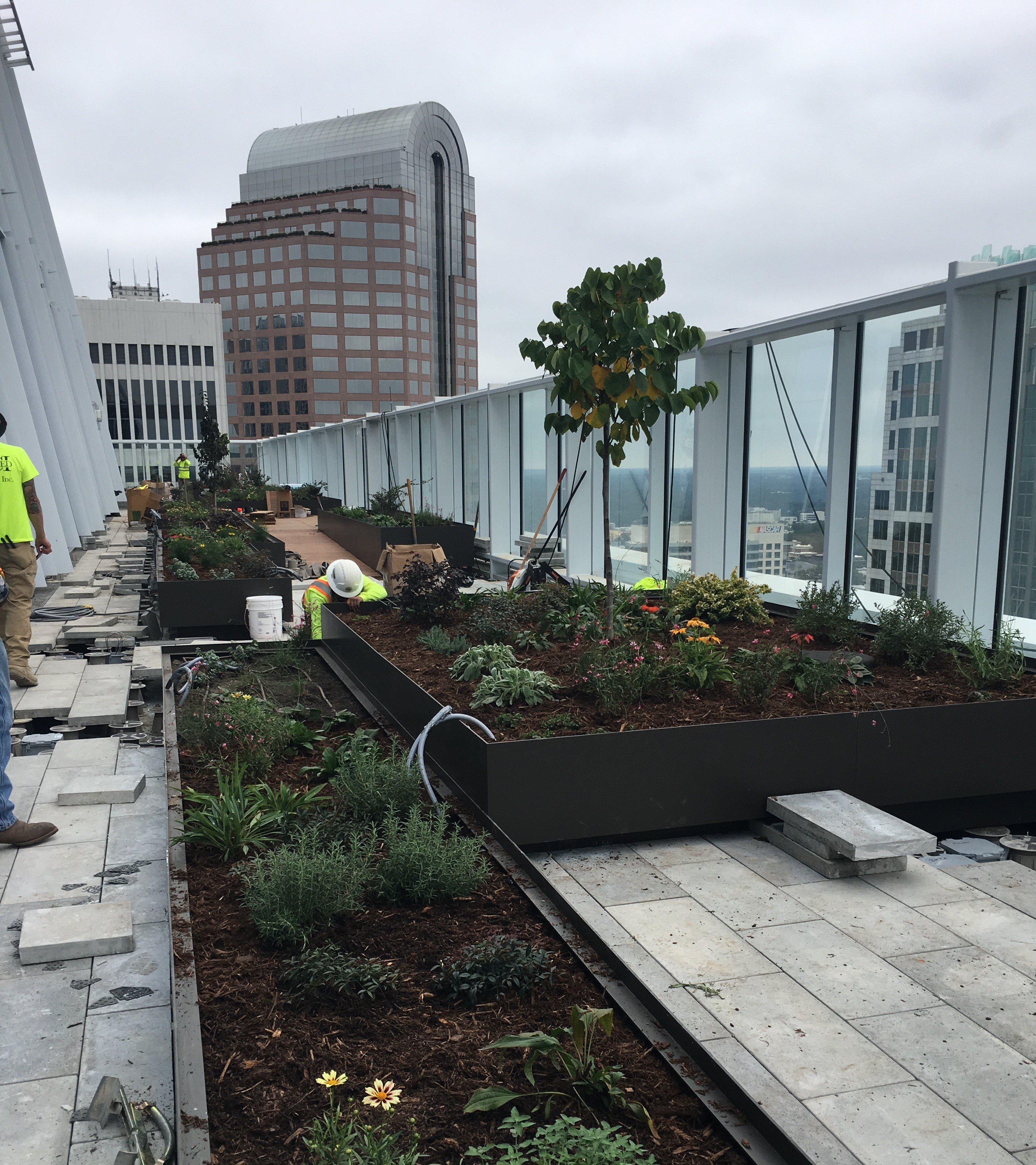 Landscape- InstLLING ROOF TOP PLANTINGS