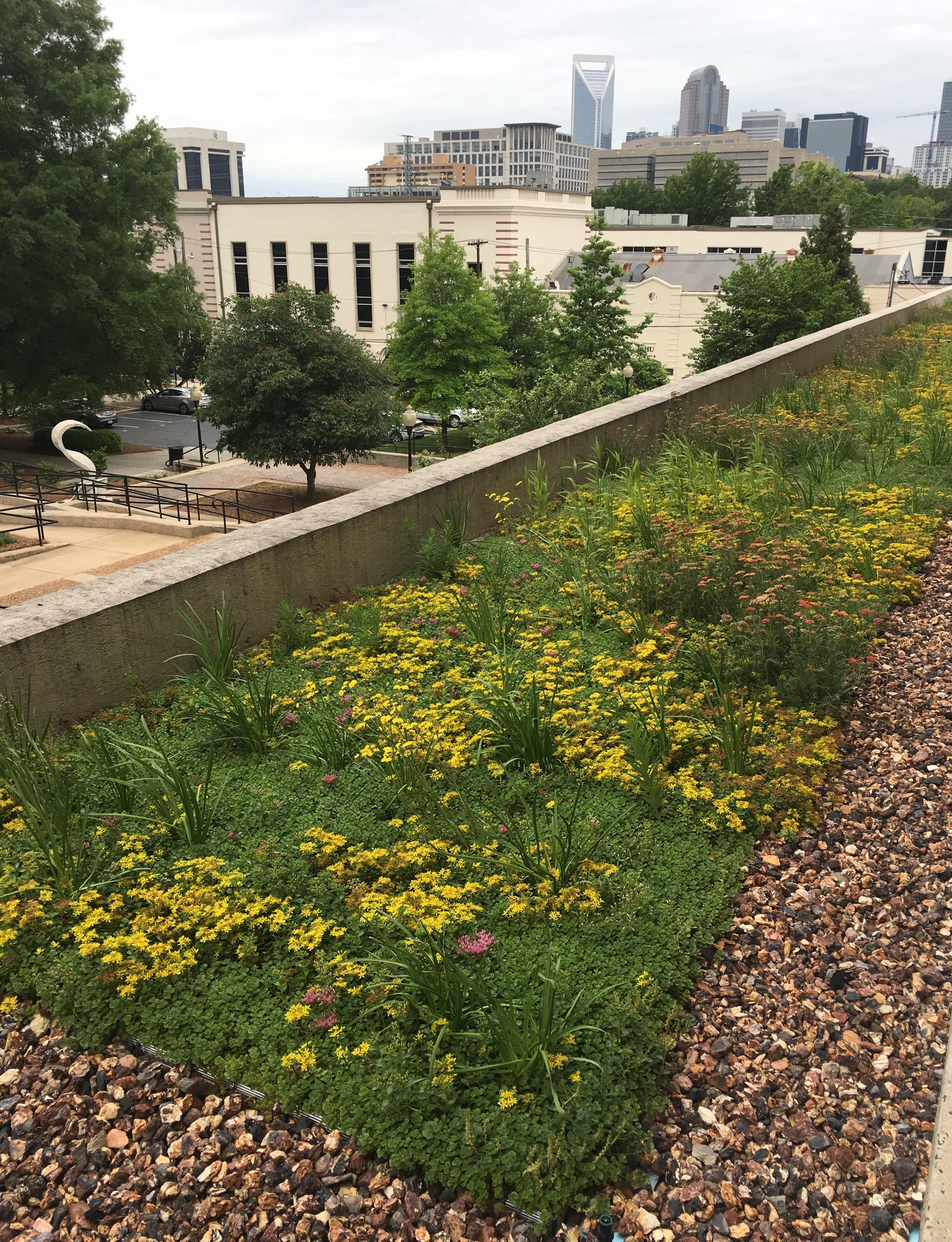 Rooftop Garden2
