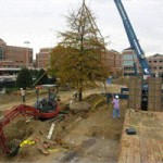 Tree-Relocation-44