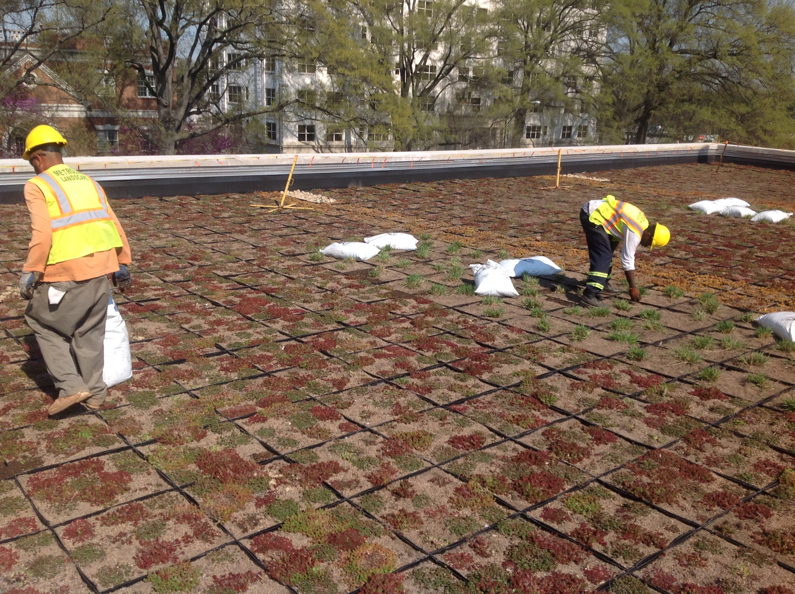 Planting a Green Roof