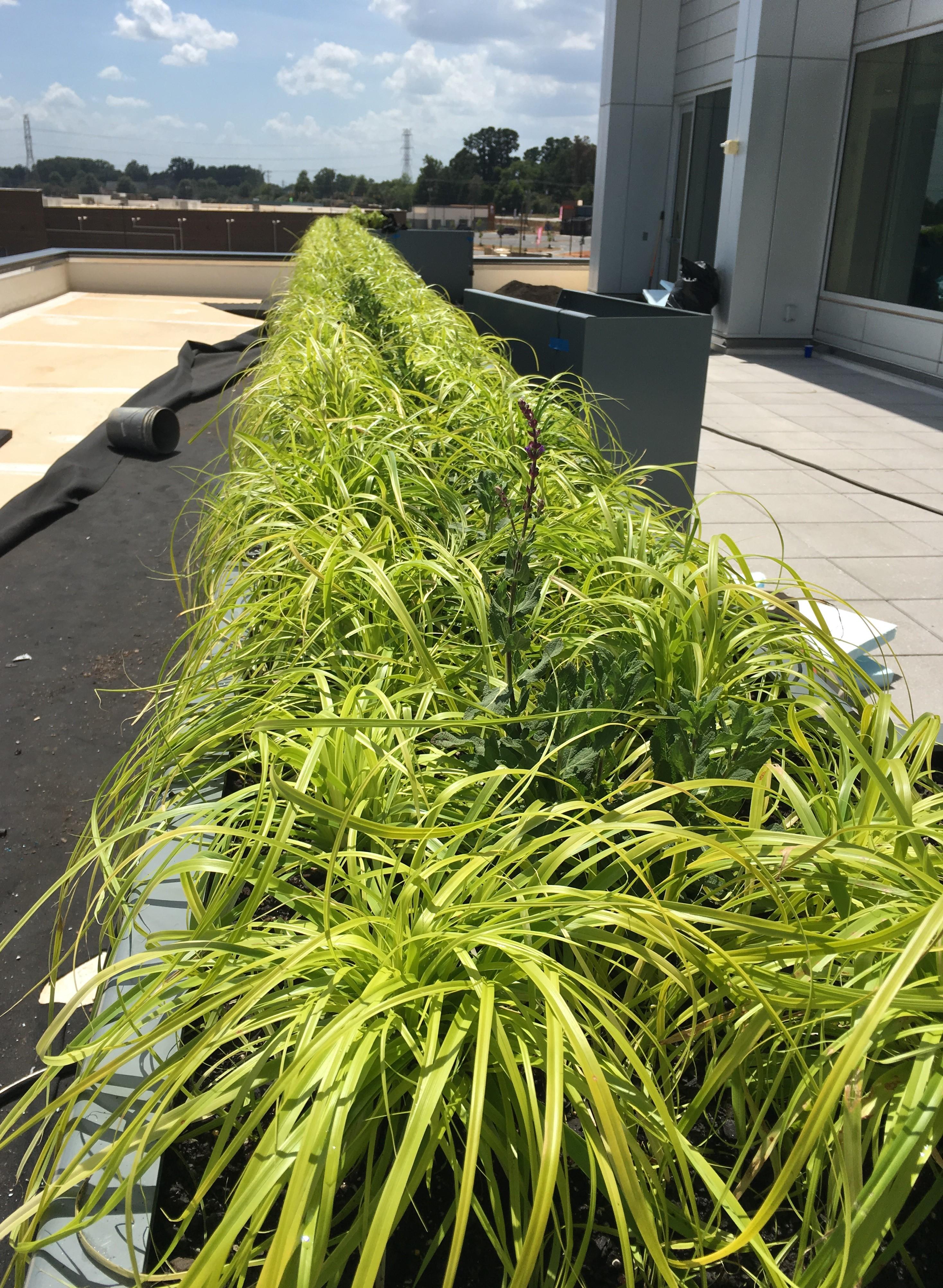 Rooftop Garden3